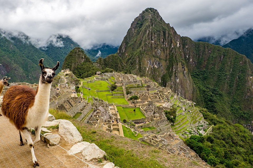 Come for the ancient Incan ruins at Machu Picchu, stay because of the llamas